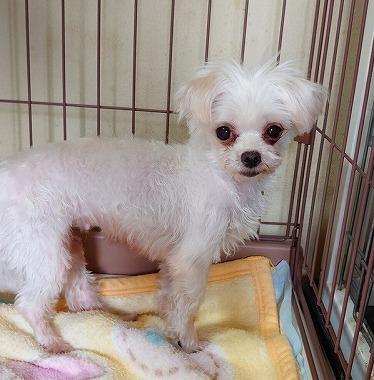 f:id:dog_life_saving:20210720100836j:plain