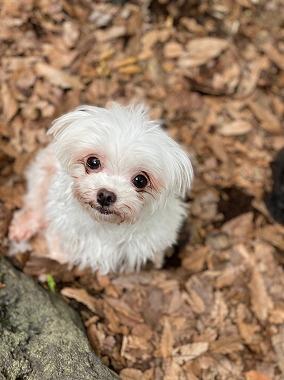 f:id:dog_life_saving:20210720100844j:plain