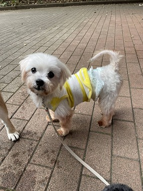 f:id:dog_life_saving:20210720100859j:plain