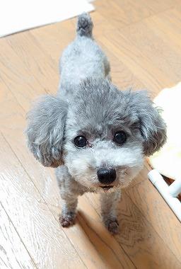 f:id:dog_life_saving:20210720100944j:plain