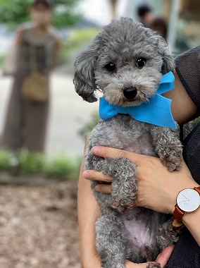 f:id:dog_life_saving:20210720101014j:plain
