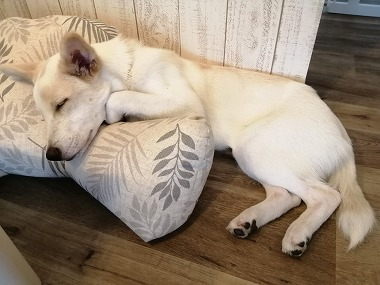 f:id:dog_life_saving:20210901122128j:plain