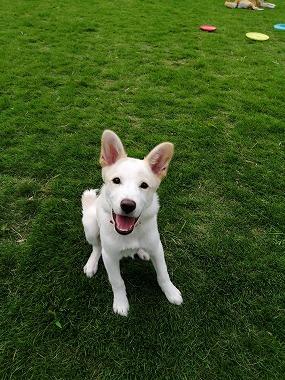 f:id:dog_life_saving:20210901122140j:plain