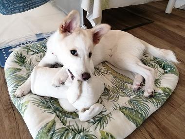 f:id:dog_life_saving:20210901122148j:plain