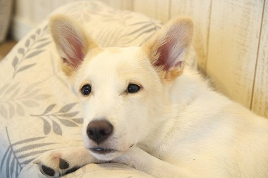 f:id:dog_life_saving:20210901122158j:plain