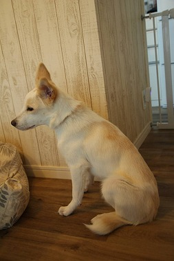 f:id:dog_life_saving:20210901122207j:plain