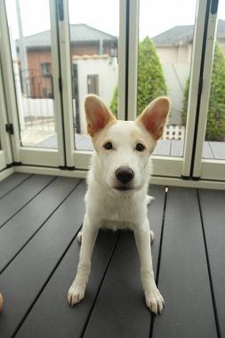 f:id:dog_life_saving:20210901122228j:plain