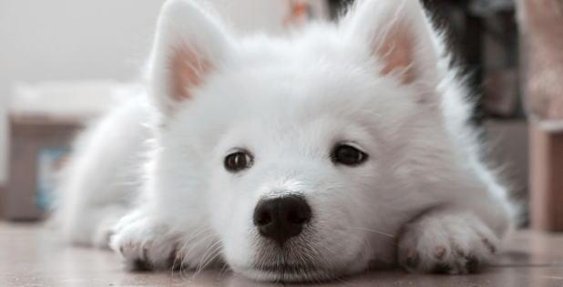 f:id:dogbsk:20171227223843j:plain
