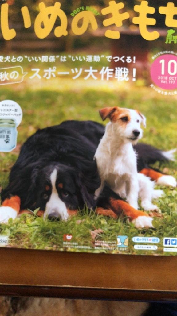 f:id:dogforest:20181202190014j:plain