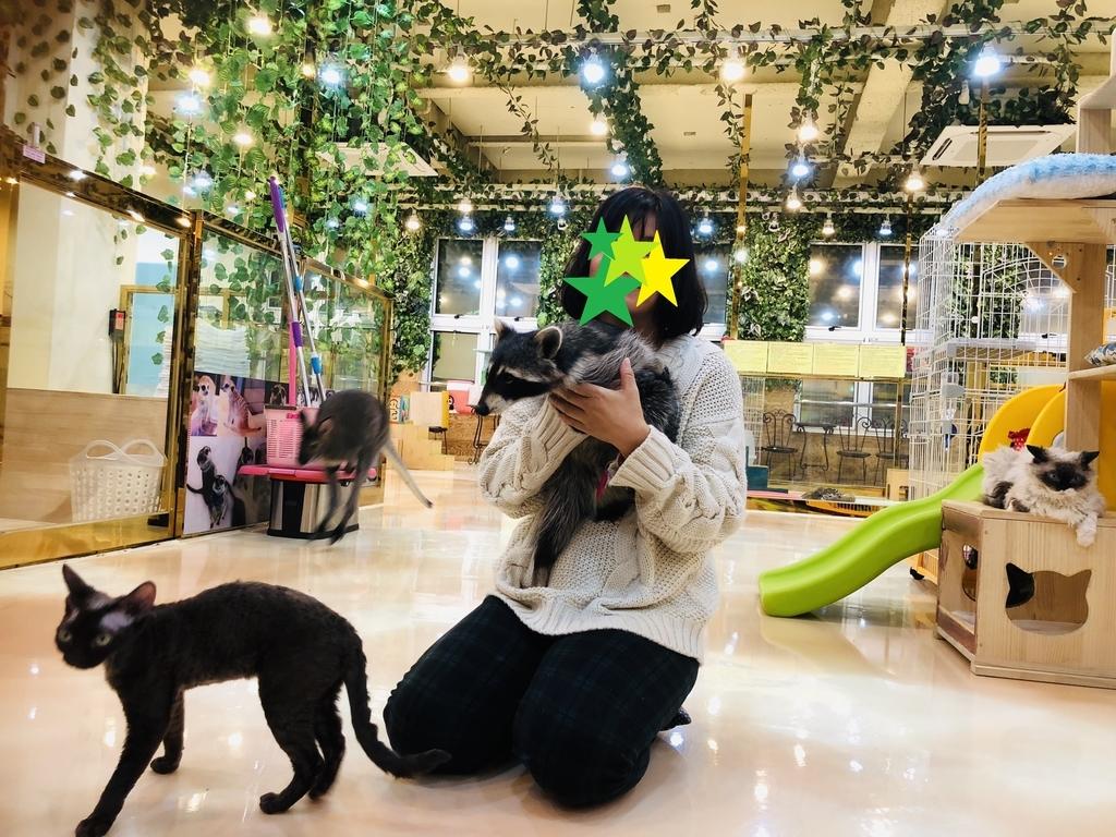 f:id:dogforest:20181214195245j:plain
