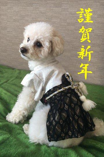 f:id:dogforest:20181231175043j:plain