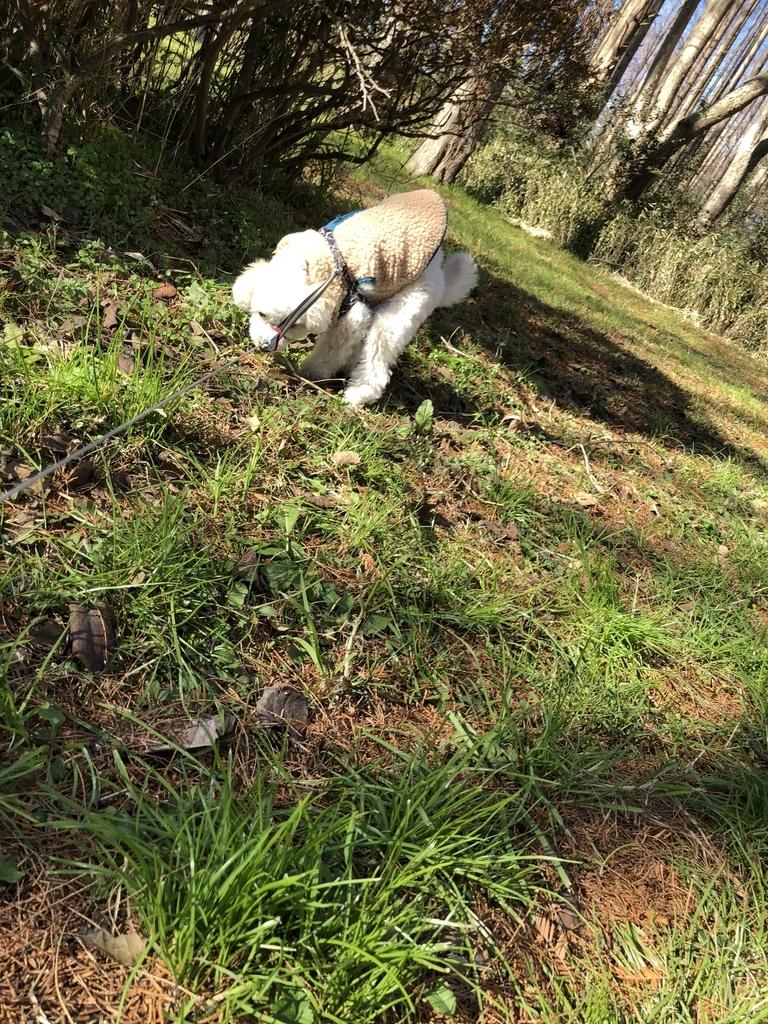 f:id:dogforest:20190102163817j:plain