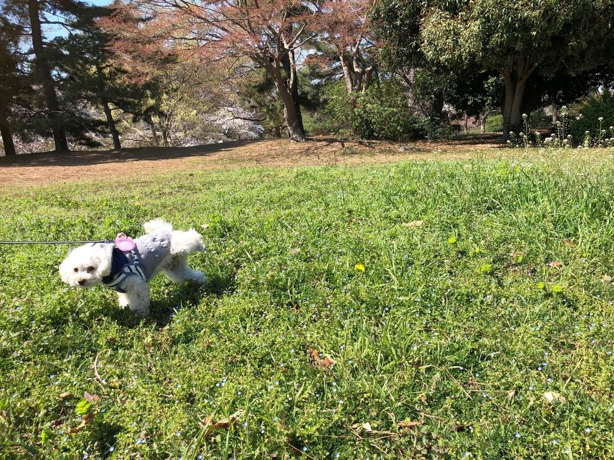 f:id:dogforest:20190403164900j:plain