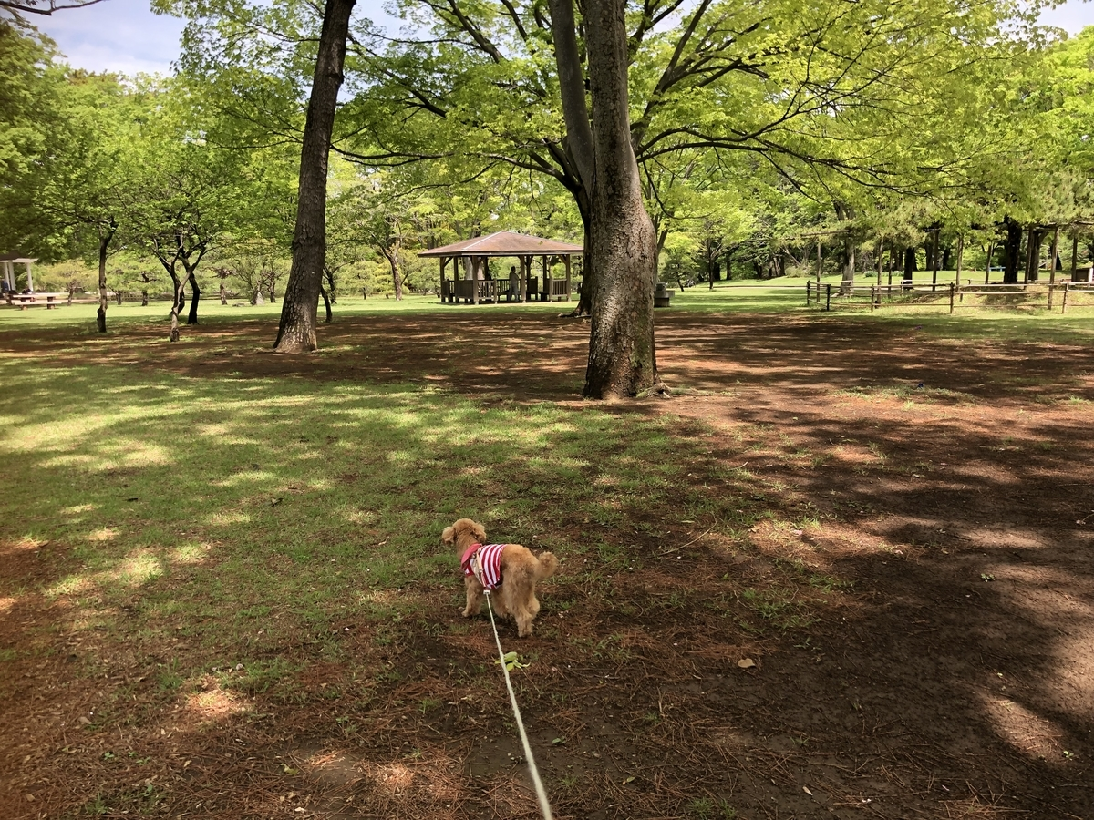 f:id:dogforest:20190501183039j:plain