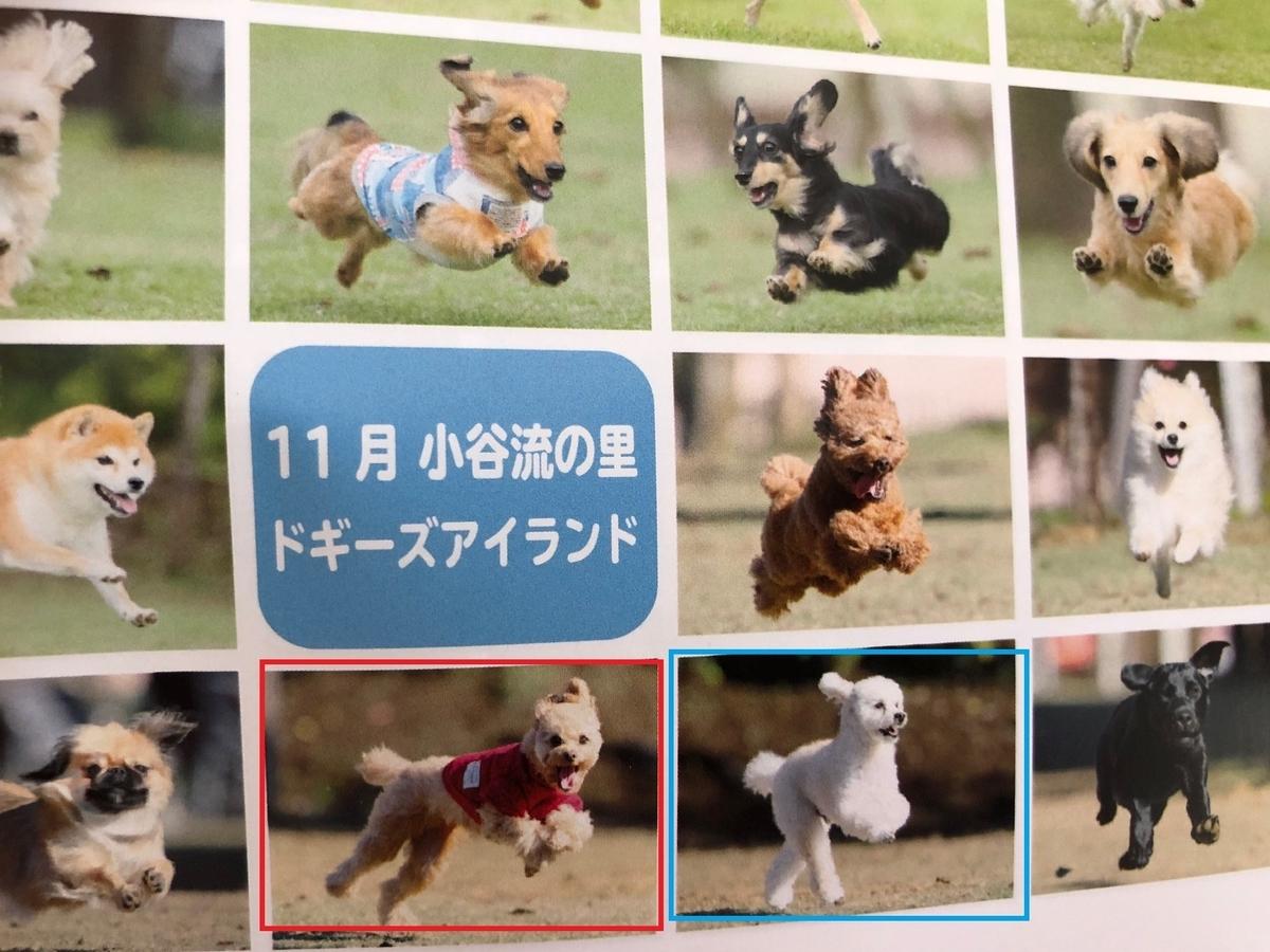 f:id:dogforest:20190502160433j:plain