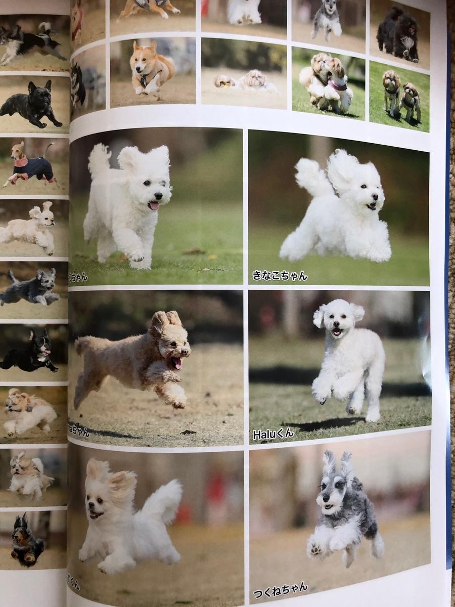 f:id:dogforest:20190502160610j:plain