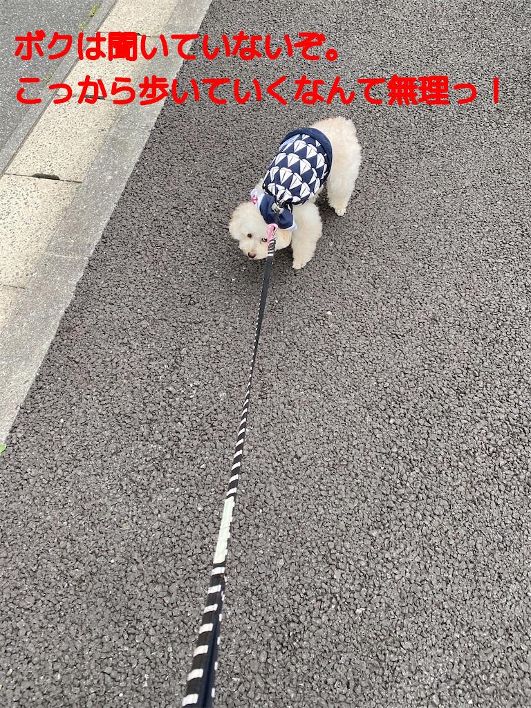 f:id:dogforest:20200601114712j:plain