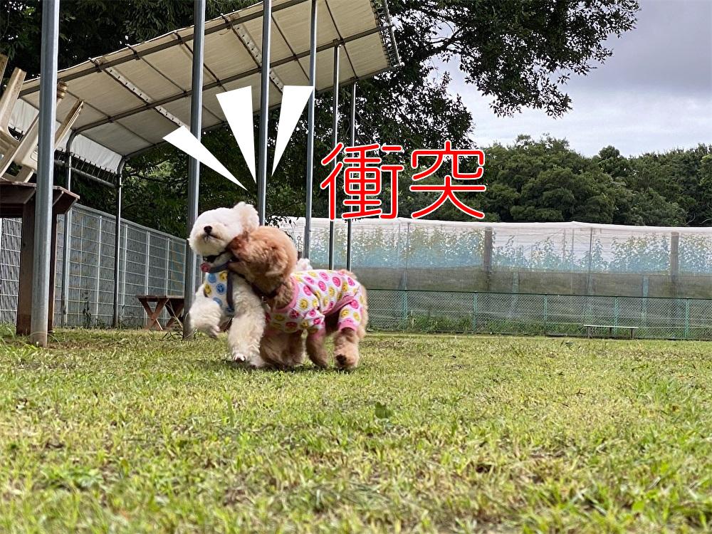f:id:dogforest:20200730114411j:plain