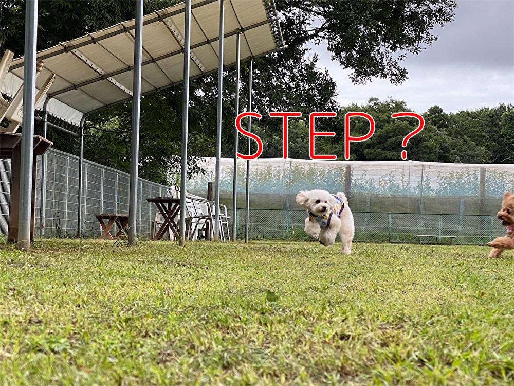 f:id:dogforest:20200730114442j:plain