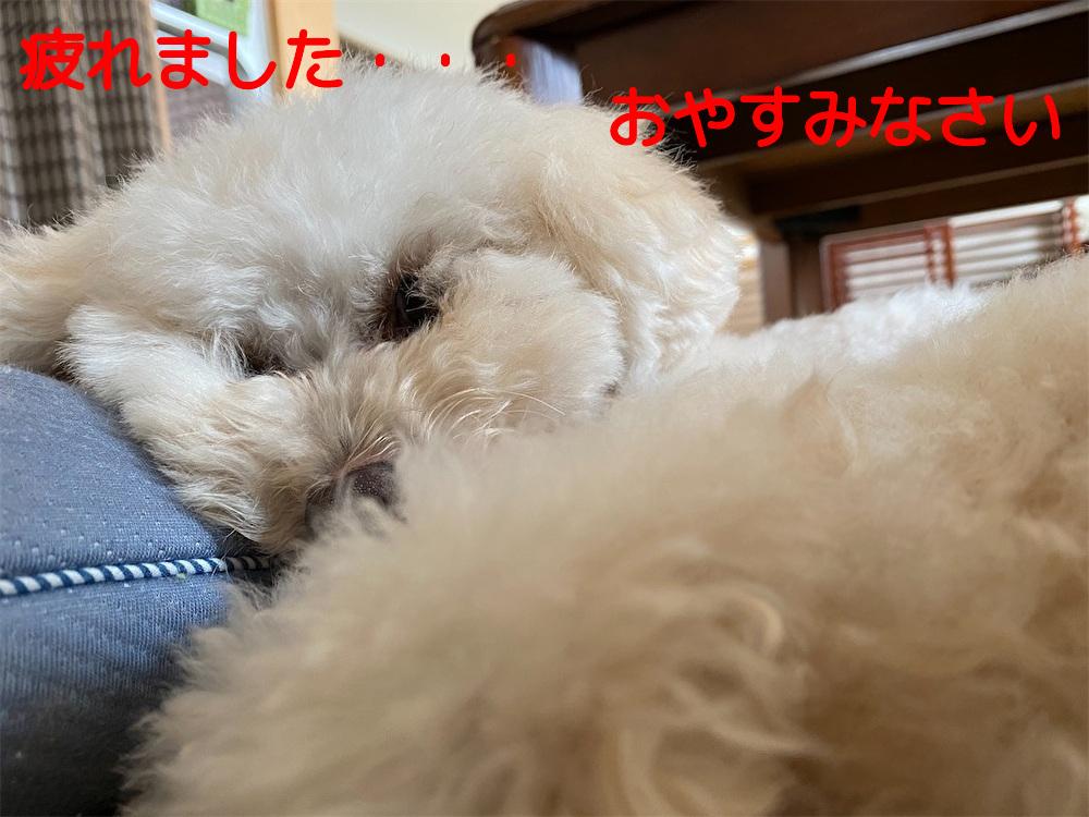 f:id:dogforest:20200928122702j:plain