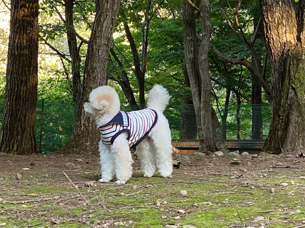 f:id:dogforest:20201010145943j:plain