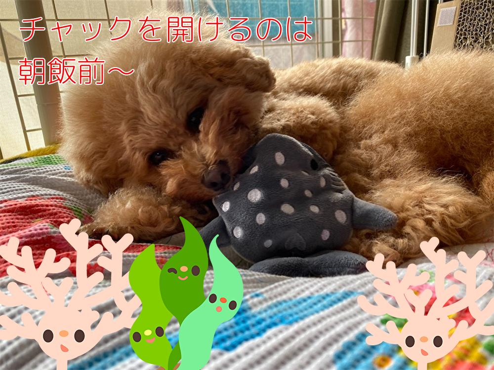 f:id:dogforest:20201024171915j:plain