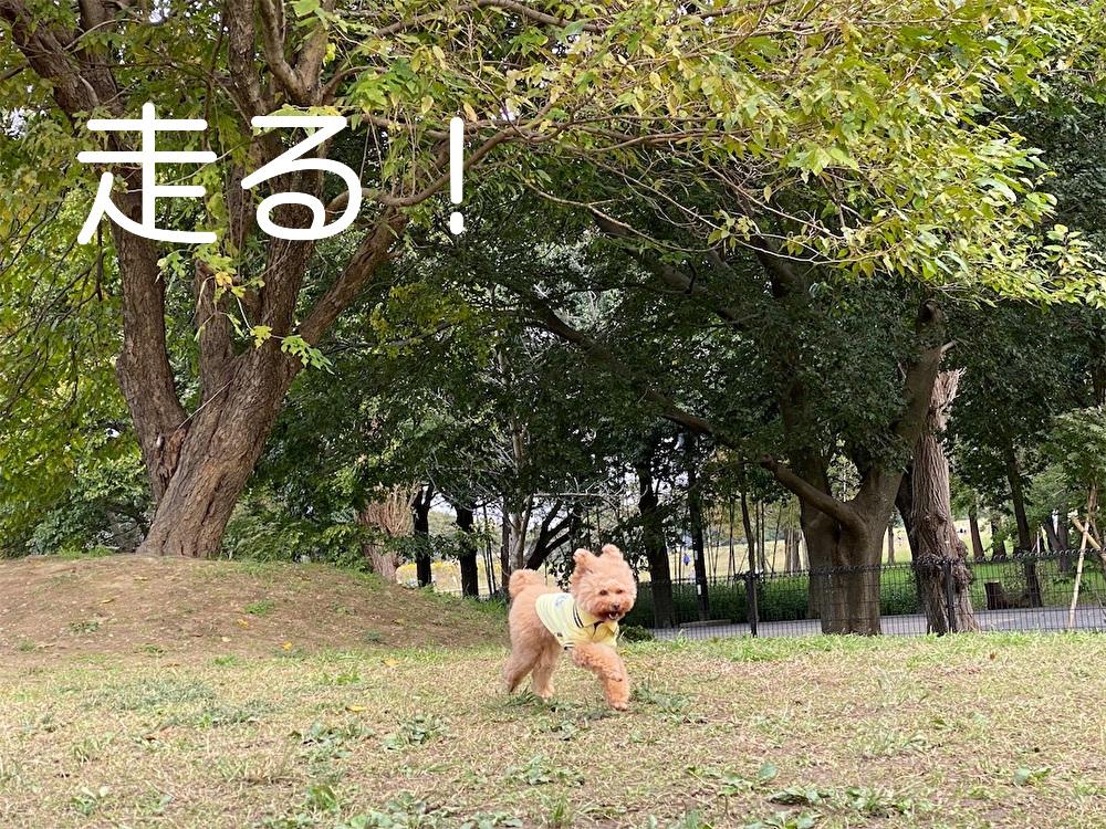 f:id:dogforest:20201028204344j:plain