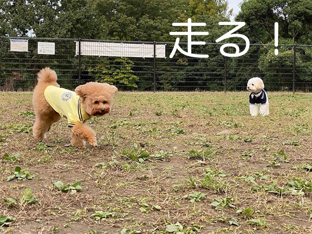 f:id:dogforest:20201028204353j:plain