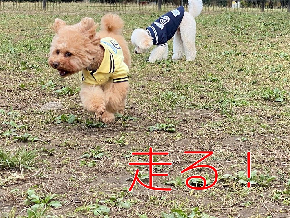 f:id:dogforest:20201028204404j:plain
