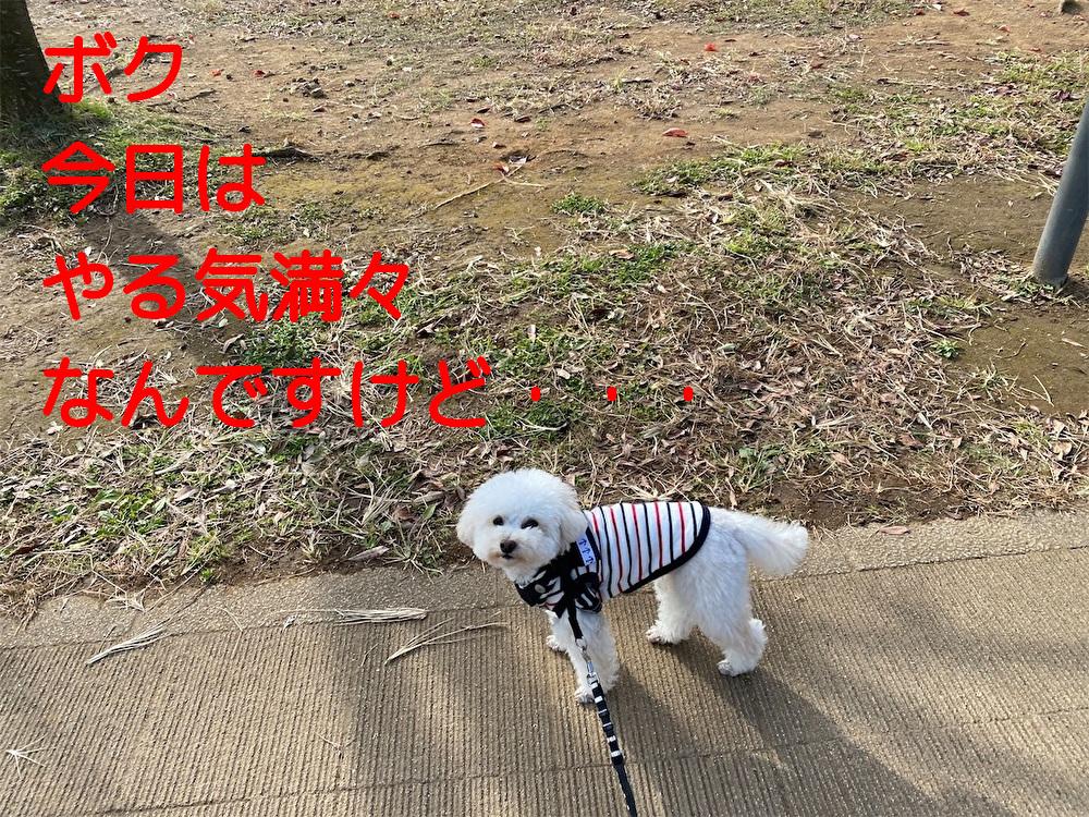 f:id:dogforest:20201107123202j:plain
