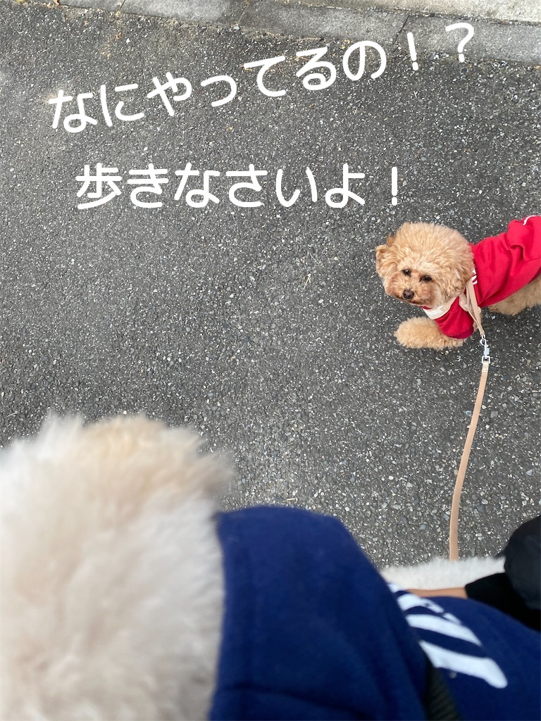 f:id:dogforest:20201112161530j:plain
