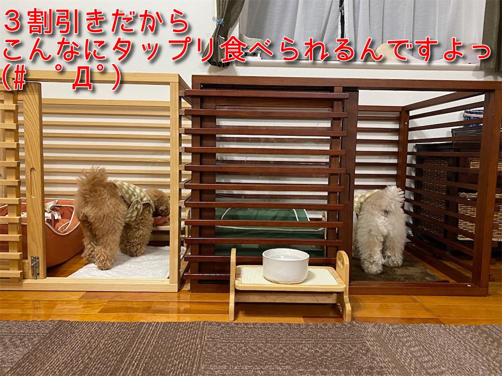 f:id:dogforest:20210116182257j:plain