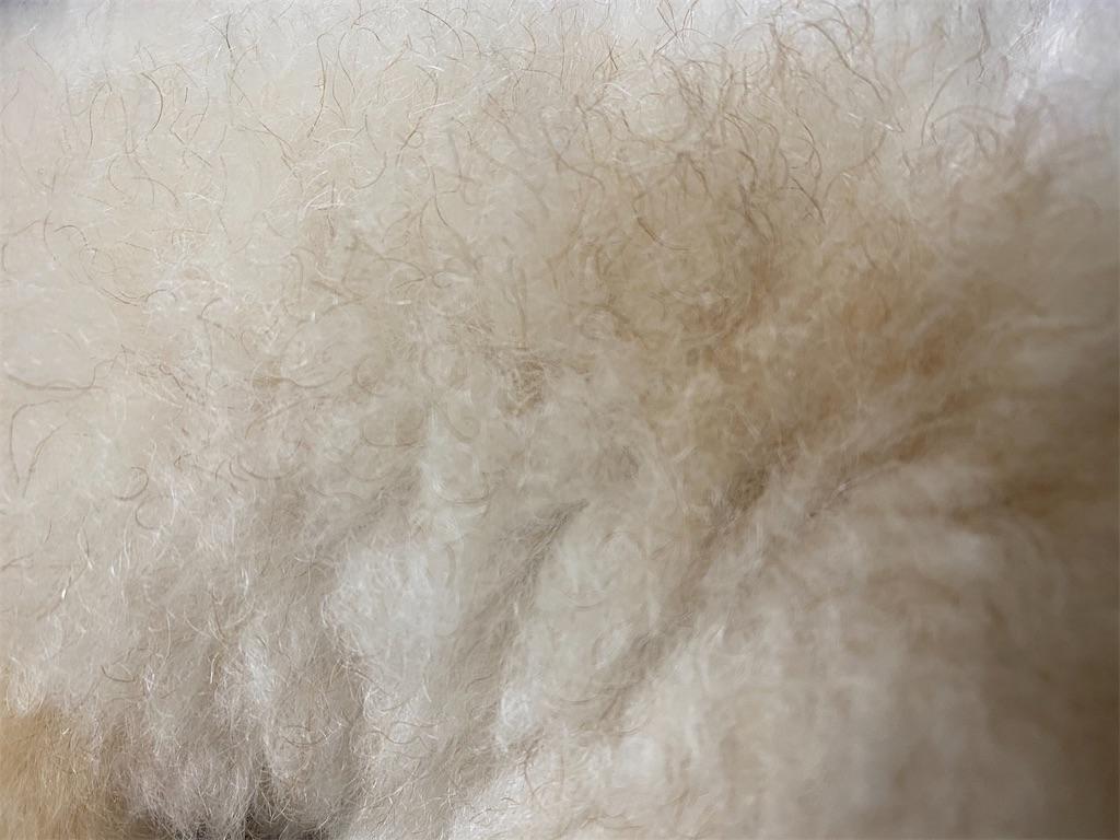 f:id:dogforest:20210119215755j:plain