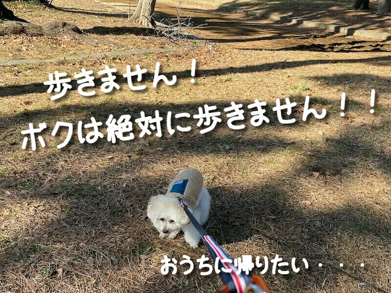 f:id:dogforest:20210204201754j:plain