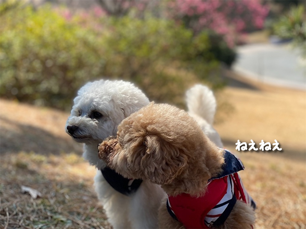 f:id:dogforest:20210207171735j:plain