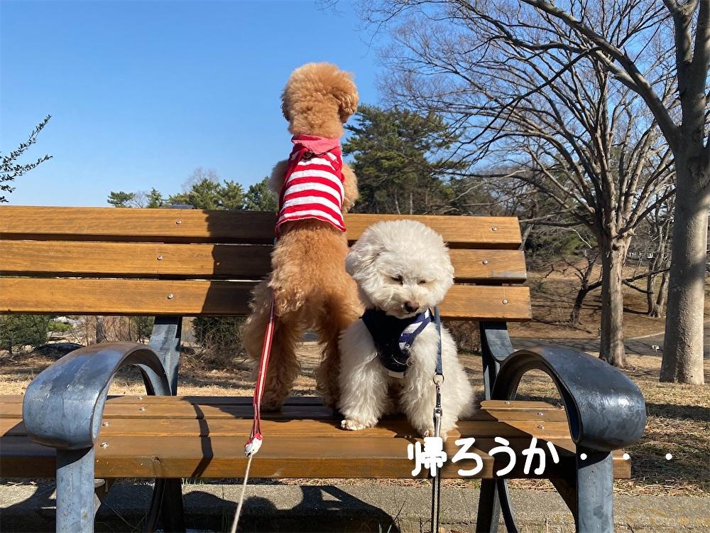 f:id:dogforest:20210221140022j:plain