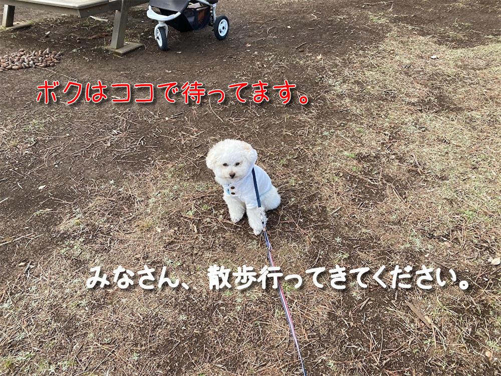 f:id:dogforest:20210309175944j:plain