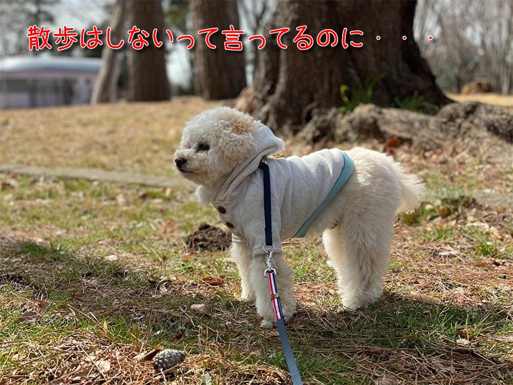 f:id:dogforest:20210309180007j:plain