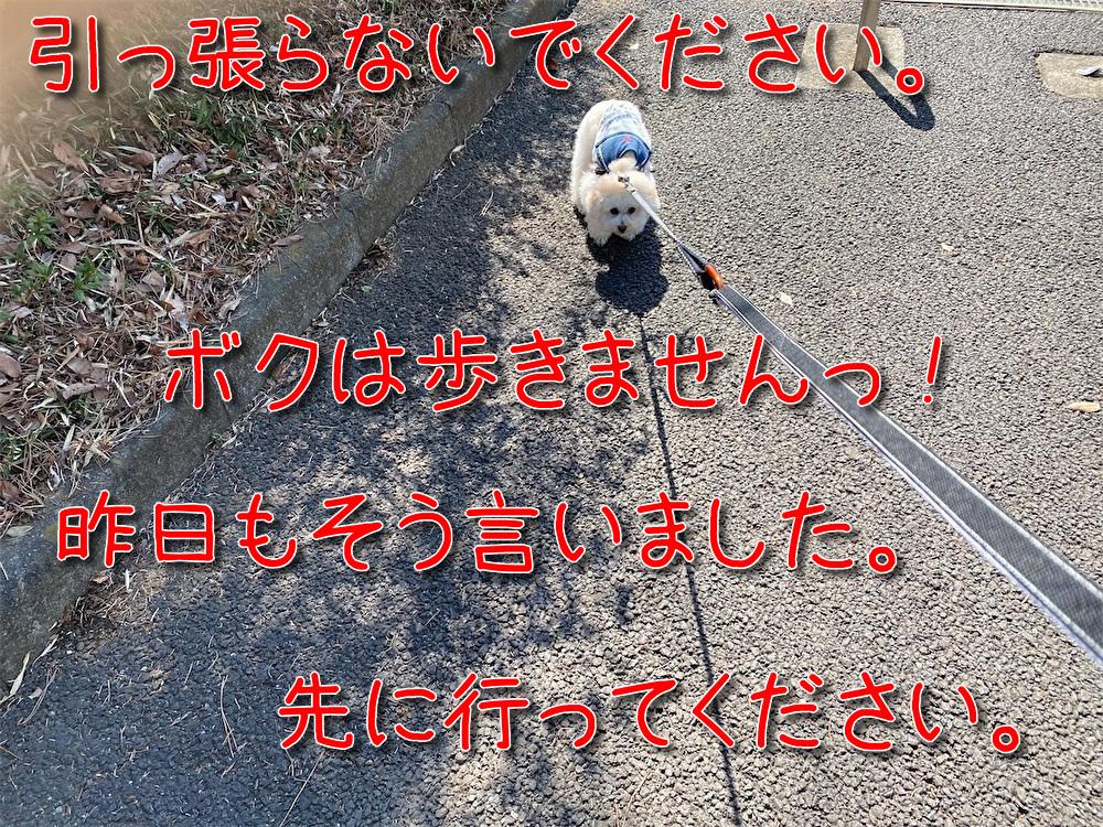 f:id:dogforest:20210310170408j:plain