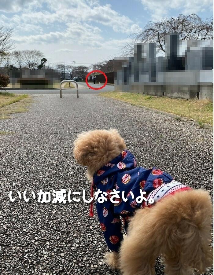 f:id:dogforest:20210322173302j:plain