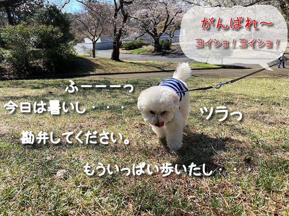 f:id:dogforest:20210323132545j:plain