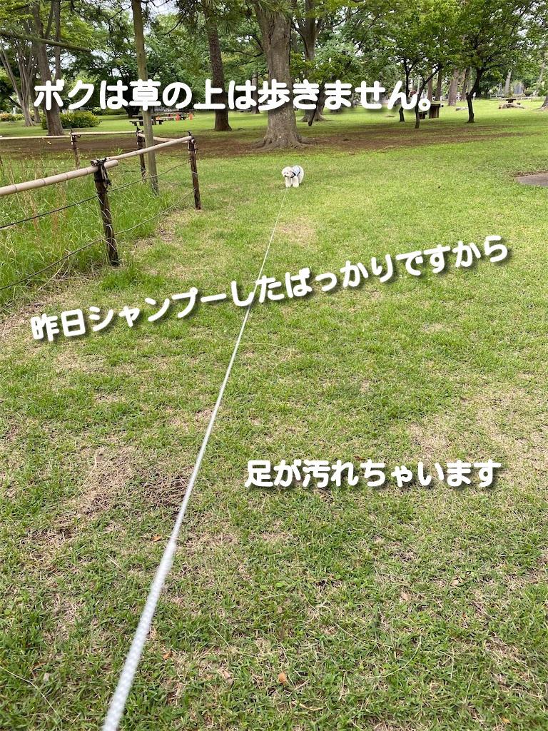 f:id:dogforest:20210602215305j:plain