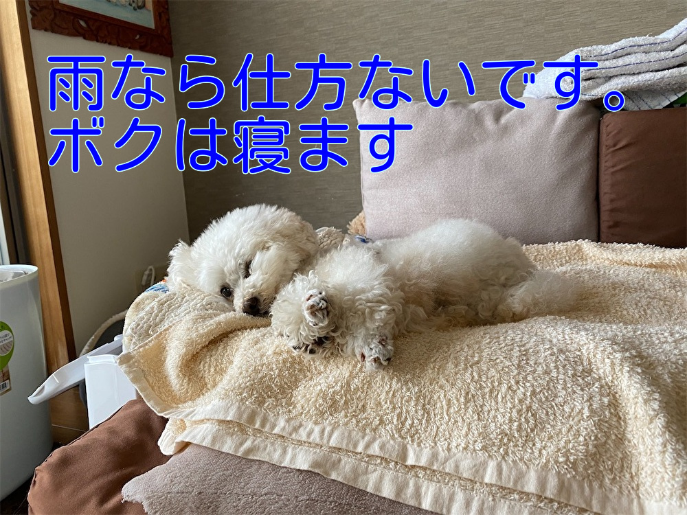 f:id:dogforest:20210604121241j:plain