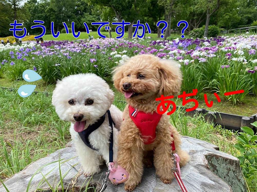 f:id:dogforest:20210610172427j:plain