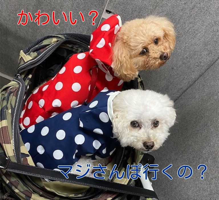 f:id:dogforest:20210703131417j:plain