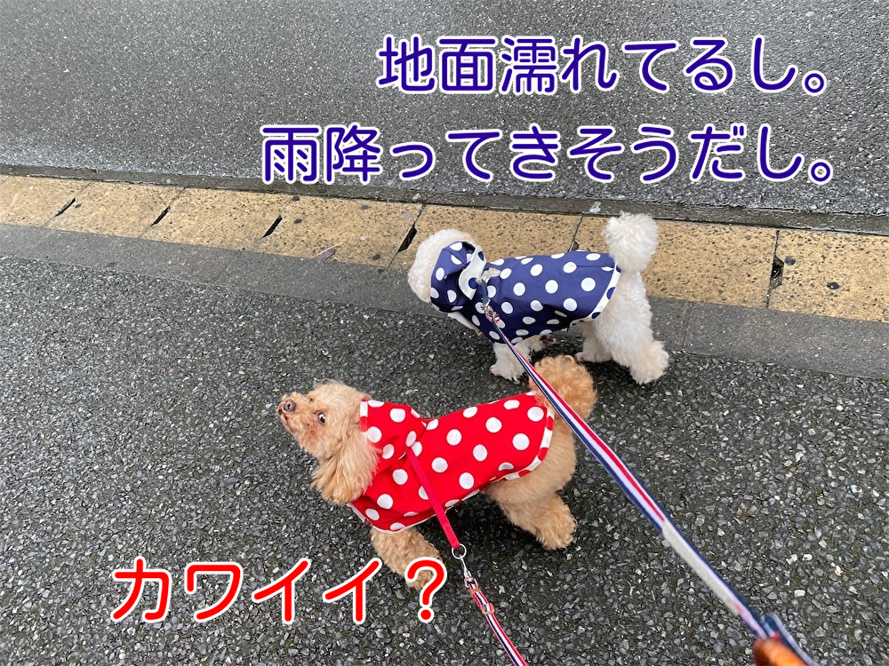 f:id:dogforest:20210703133733j:plain
