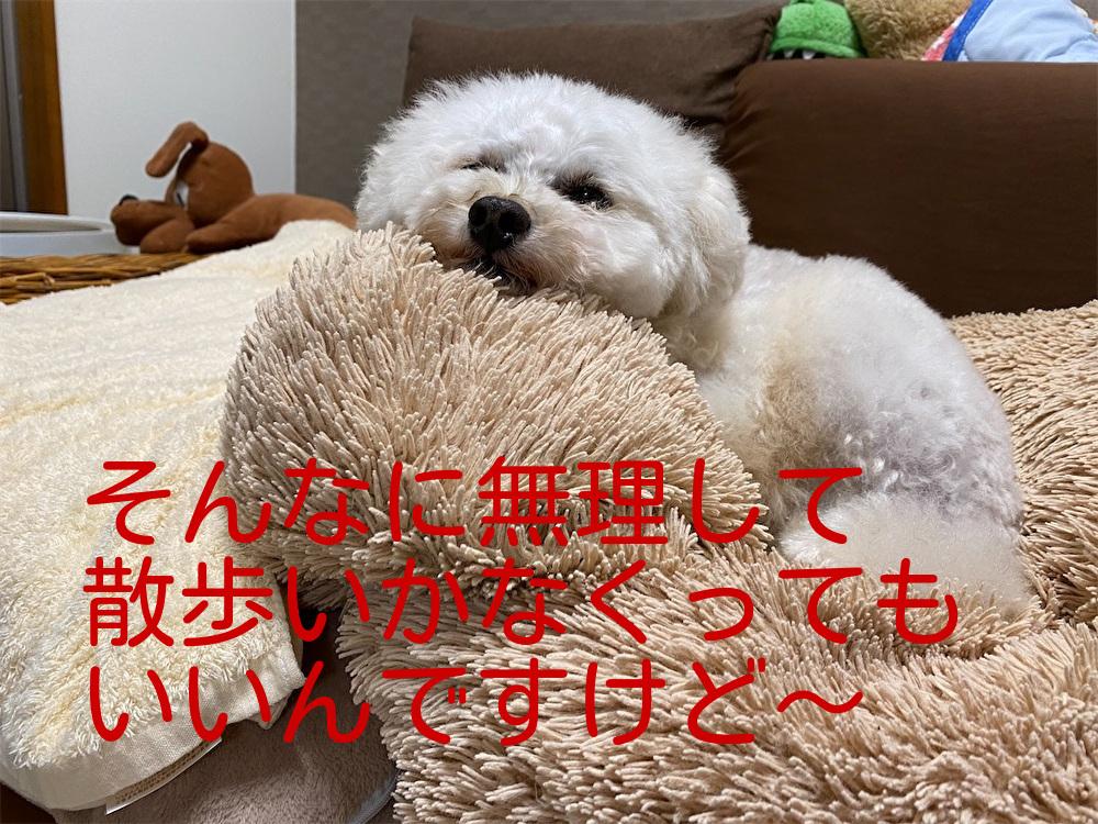 f:id:dogforest:20210723161424j:plain