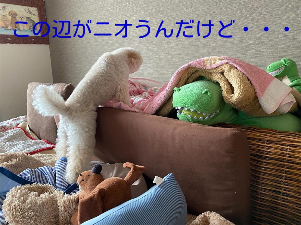 f:id:dogforest:20210808153301j:plain