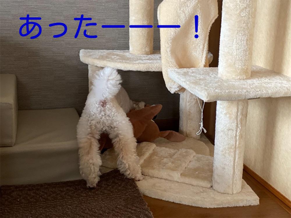 f:id:dogforest:20210808153527j:plain