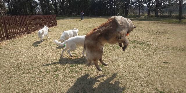 f:id:doggyparkbellhouse:20200322142126j:image